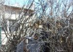 Foreclosed Home en COCHISE ROW, Bisbee, AZ - 85603